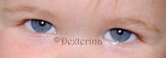 yeuxloupiottes